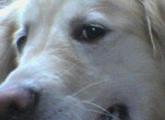 スクリーンショット(2011-05-18 15.23.01)