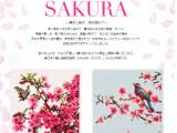 feiler-sakura